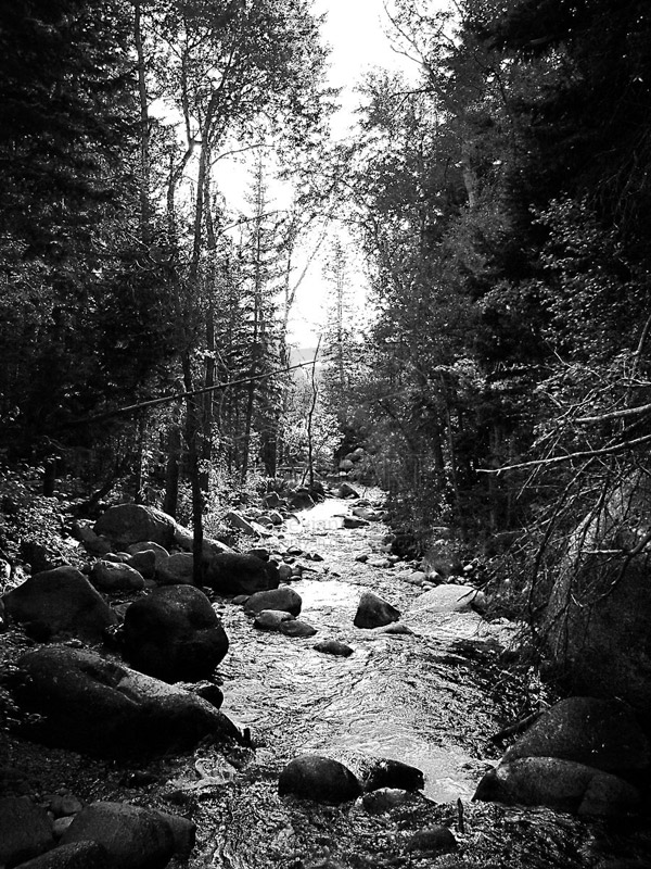 Black white stream trees photo