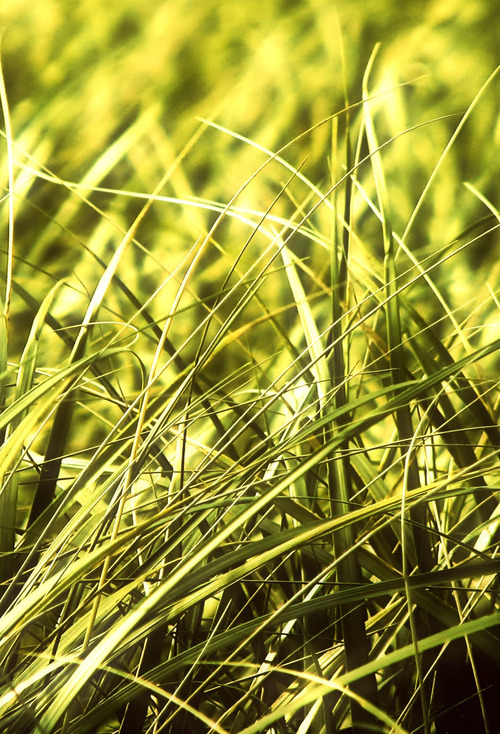 Grass ios 7 wallpaper