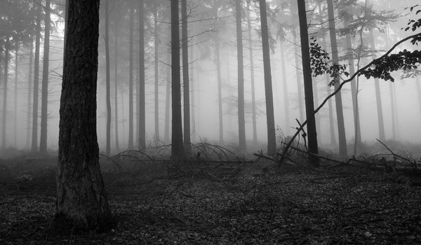 4:Scary-Forests-Forest-Black-White-Fog-In-Forrest-Tube-526131