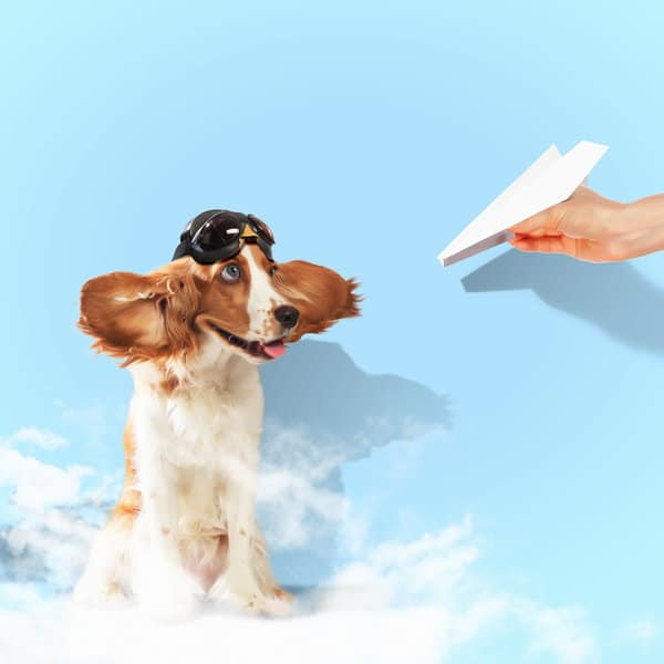 dog and flying paper plane