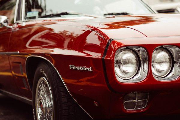 Red firebird