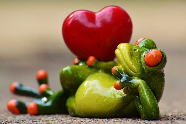 Frog with the heart
