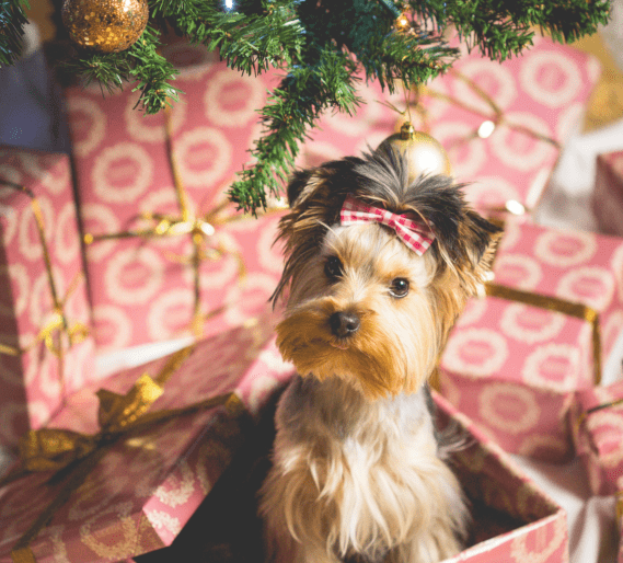 pup as a present