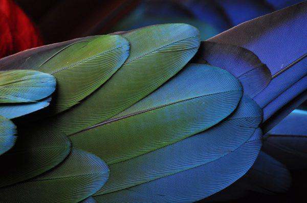 metalic feather