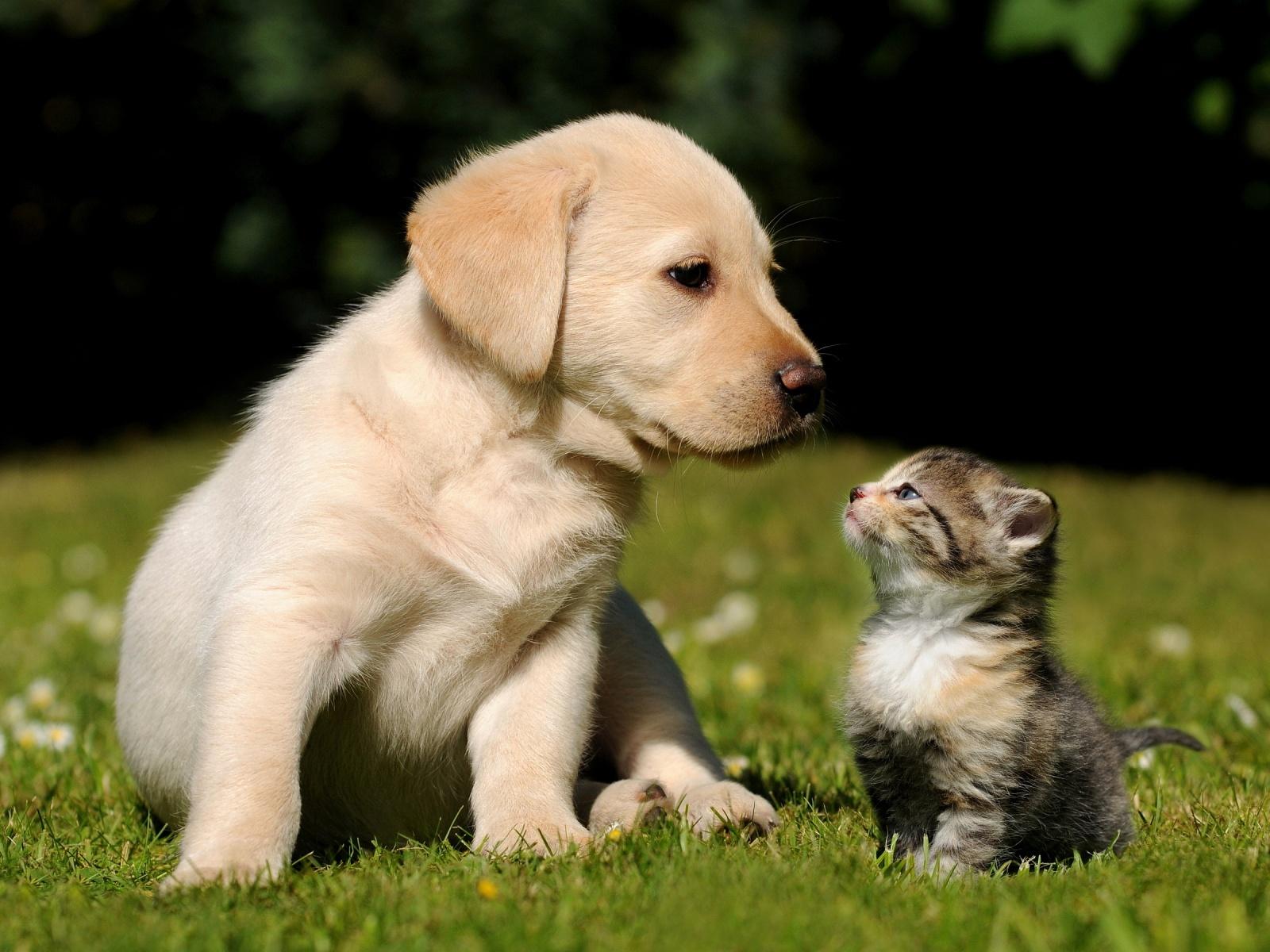 Cute-Puppy-Kitten